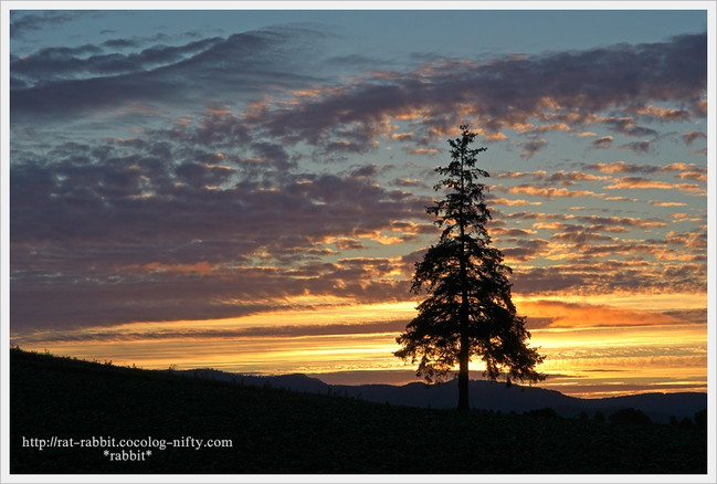 Christmastree03_2