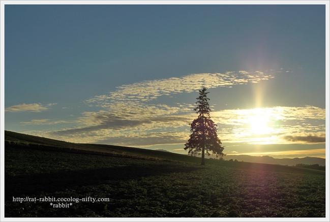 Christmastree05