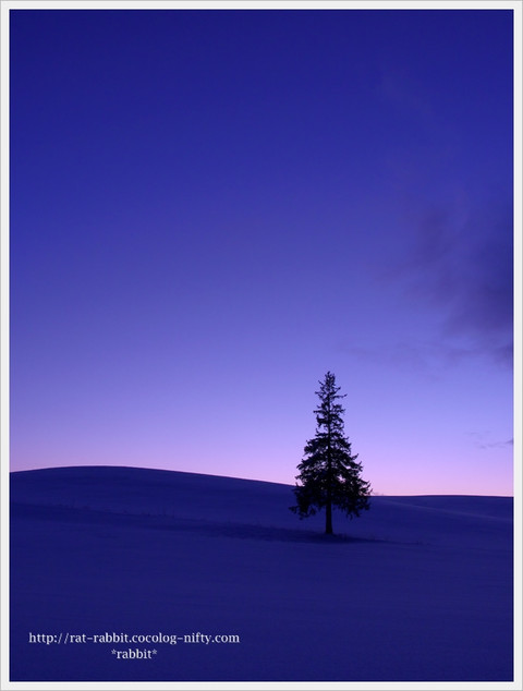 Christmastree01