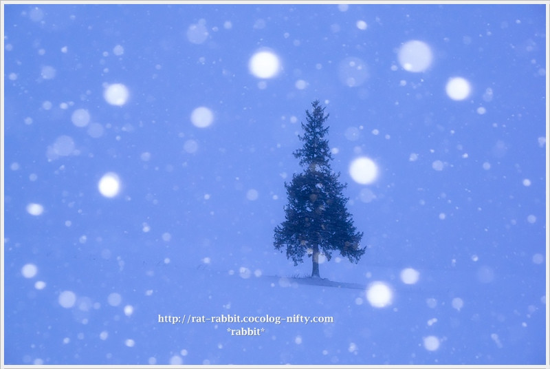 Snowtree01