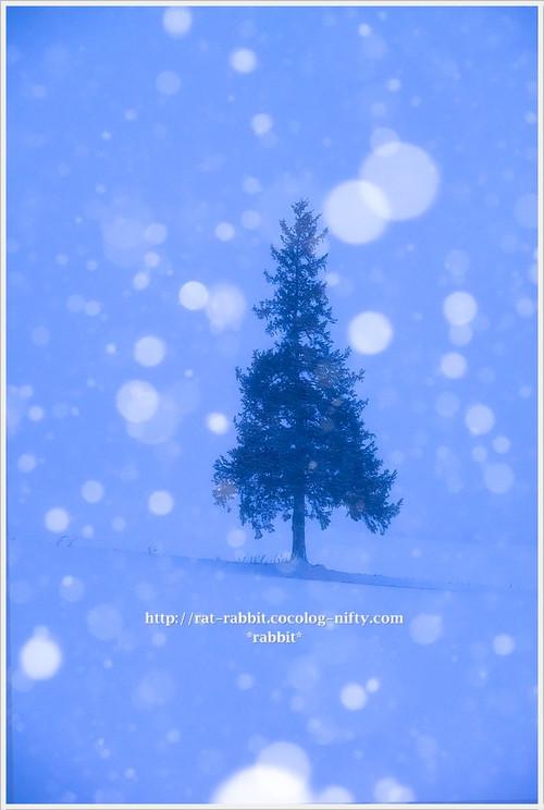 Snowtree02