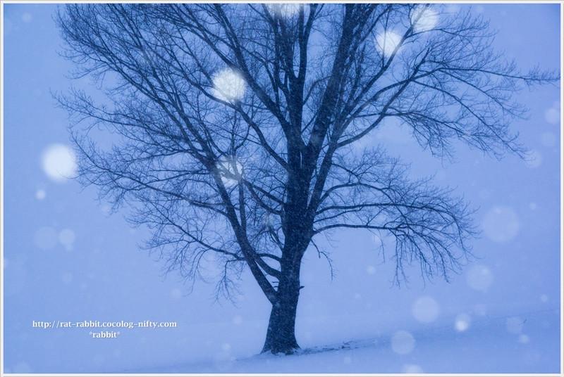 Snowfall02