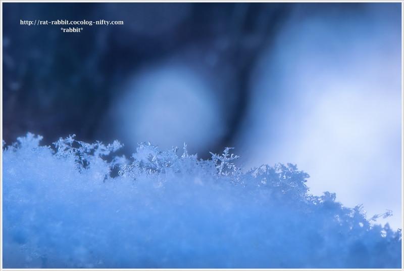 Snowcr01