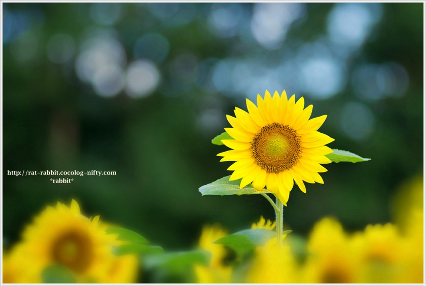 Sunagawa03